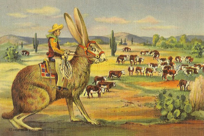 vintage-texas-postcard