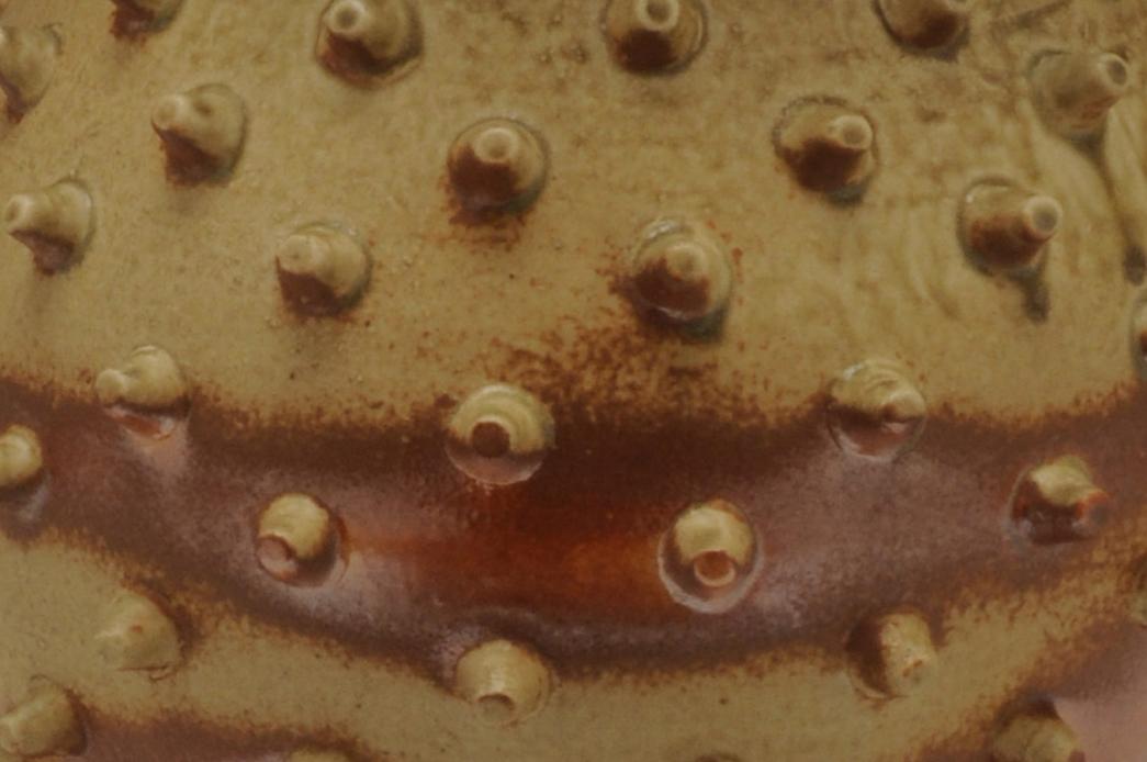 armored-gourd-closeup
